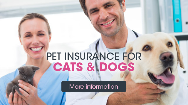 insurance cats dogs