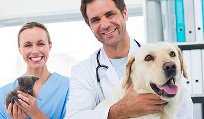 Pet Insurance for Cats and Dogs